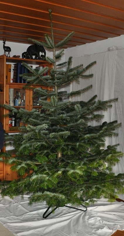 Mein Stiefschwiegervater verstarb im April 2014. In seinem Garten pflanzte er für viele Jahre Nordmannstannen für Weihnachten.